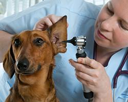 fundacja na rzecz zwierząt, adopcje psów, adopcje kotów - wspolpracujemy_1